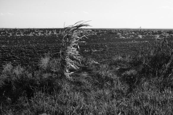 Corn, Washington County, CO-1